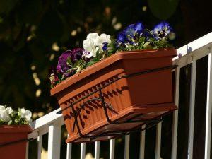 plantes sur un balcon